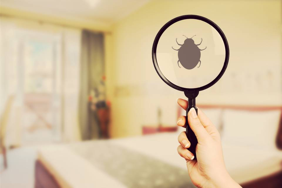 Woman holding a magnifying glass to check for bugs